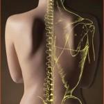 quiropraxia 150x150 OSTEOPATÍA ESTRUCTURAL INTENSIVO 2013